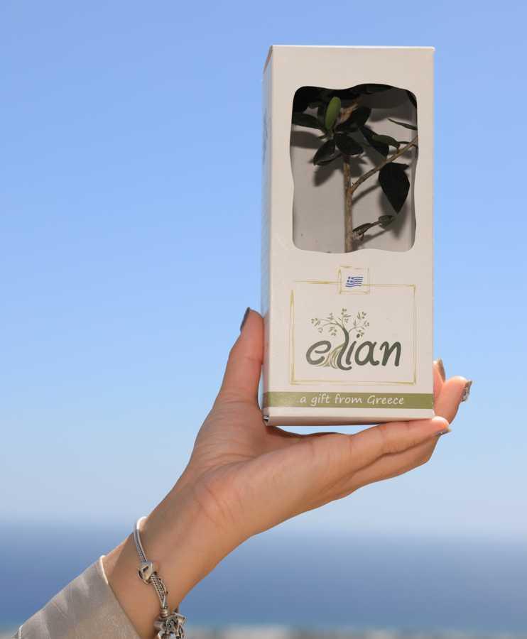 Sample of Elian gift 2