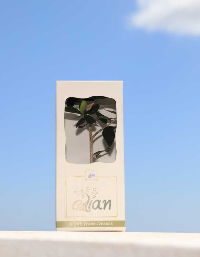 Sample of Elian gift front side box