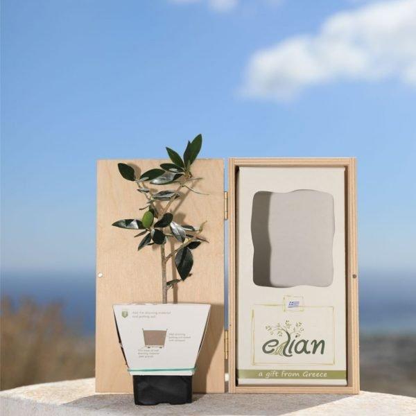 Elian Small Wooden Box