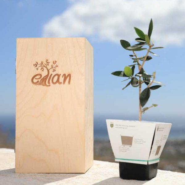 elian small wooden box gift 2