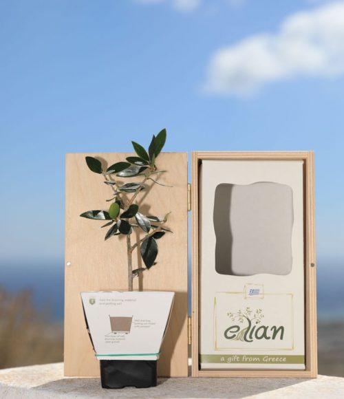 Elian small wooden box gift